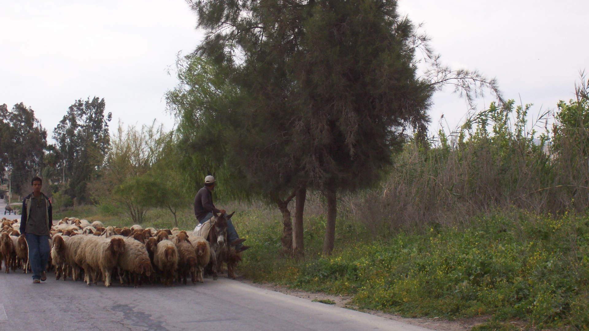 Al Oyoun Trail Hike